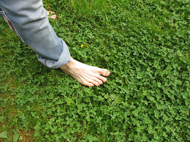 The summer sensation of barefeet on grass