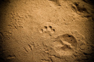 TrackingLeopard