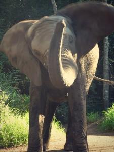 Something About The Elephant